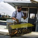 Mike Lobster Guy Westport point, buy lobsters